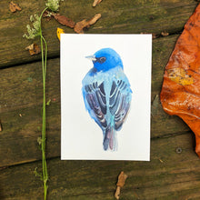 Load image into Gallery viewer, Bird Painting Indigo Bunting, blue bird watercolor Kat Ryalls fine art print, audubon, wall art, home decor