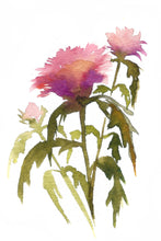 "Load image into Gallery viewer, 6 Wildflower Watercolor Flower Prints | Botanical Print Set 5x7""  Floral Thistle Home Decor Art Kat Ryalls"
