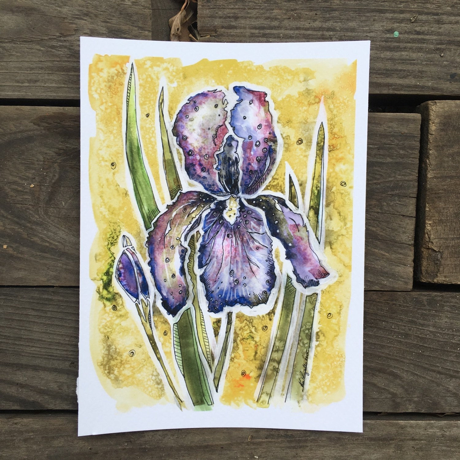 Iris Flower watercolor fine art print Kat Ryalls | floral art | home decor | wildflower painting