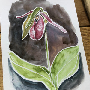 Pink Lady slipper watercolor print