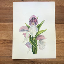 Load image into Gallery viewer, Showy Orchis watercolor