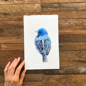 ORIGINAL Indigo Bunting Watercolor