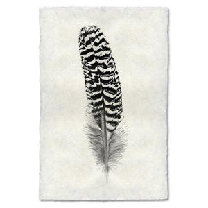 Feather Study #13, Mottled Peacock