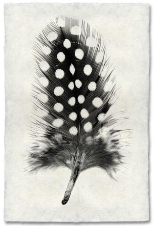 Feather Study #1, Guinea Fowl