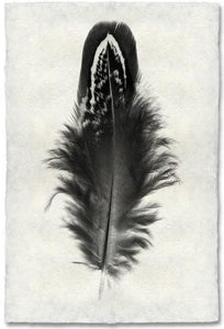 Feather Study #3