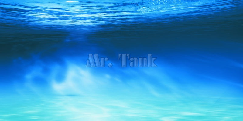 Mr.Tank Aquarium Background Poster