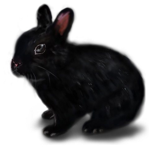 Black Rabbit Friday
