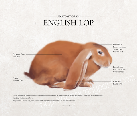 English Lop Poster