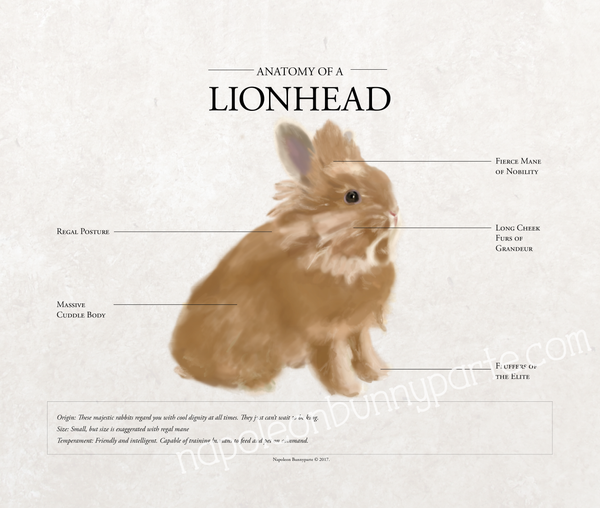 Lionhead Canvas Wall Art (16 x 20)