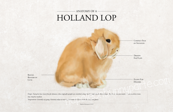 Holland Lop Poster