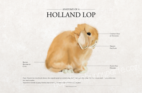 Holland Lop Canvas Wall Art (16 x 20)