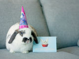 Hoppy Birthday to Me Card