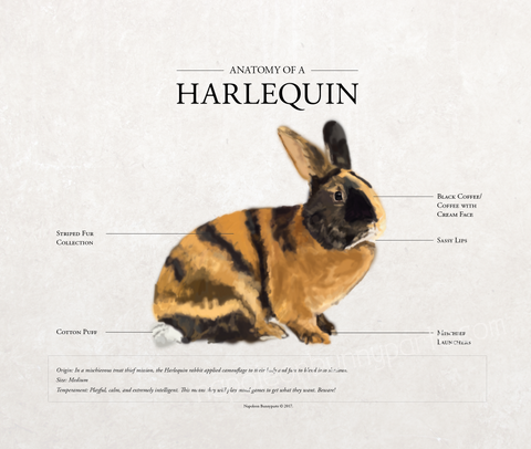 Harlequin Canvas Wall Art (16 x 20)