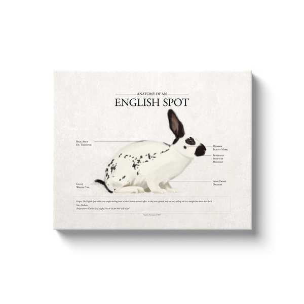 English Spot Canvas Print (16 x 20)