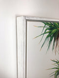 Pandanus #2 - Framed Canvas