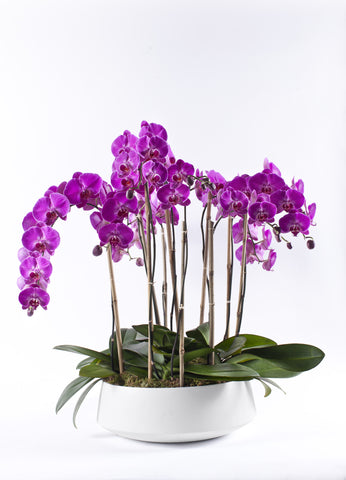 Specialty Orchids