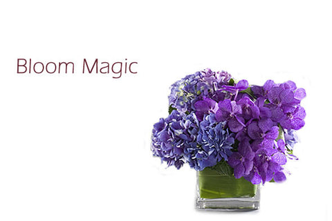 """Bloom Magic"""