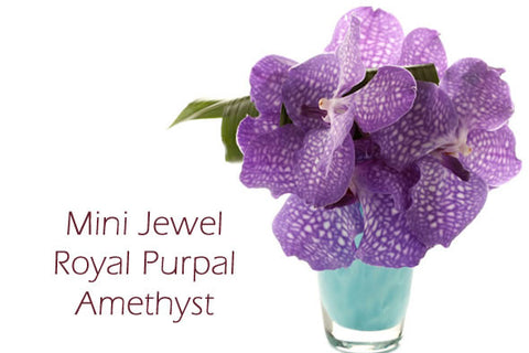 """Mini-Jewel Royal Purple Amethyst"""