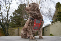 Seamus Harris Tweed Dog Harness - My McDawg