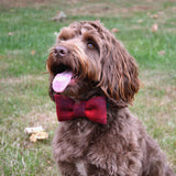 Harris Tweed Bow - My McDawg