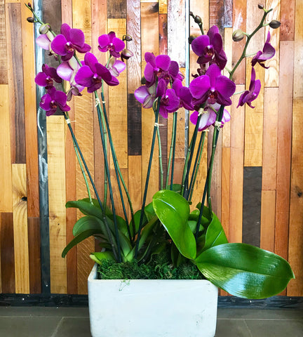 Prague Orchid Planter