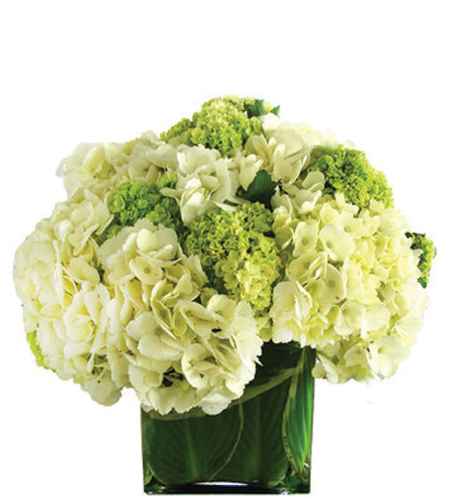 Green and White Hydrangea Squared