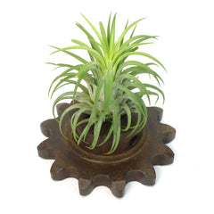 Steampunk Gear Planter - Medium