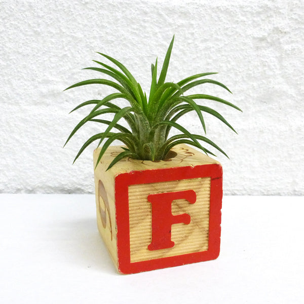 Roots in Rust Alphabet Block Planters