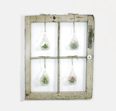 Window Frame Terrarium Wall Garden - 4-Pane