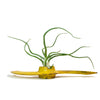 Yellow Propeller Planter
