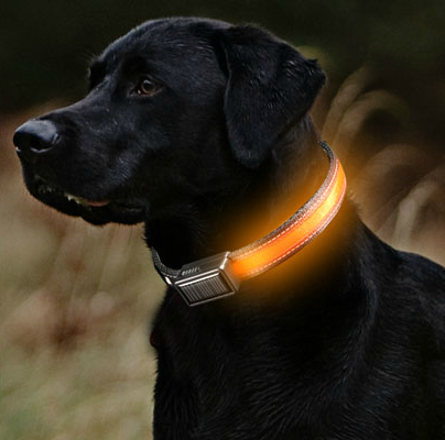 Brite-Strike Lighted Dog Collar/Leash