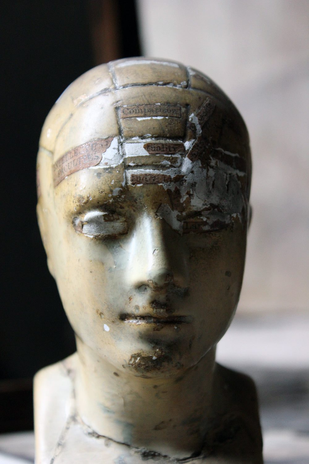 A Rare Plaster Phrenology Bust Prepared by A.L. Vago (1839-1896) London 1869
