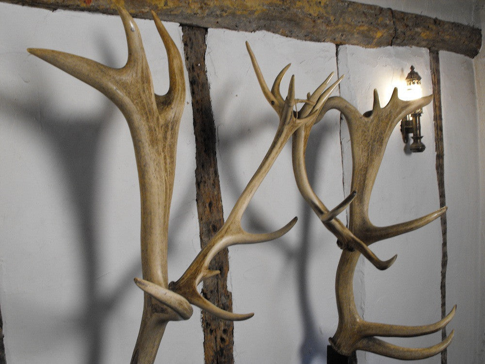 A Phenomenal 1930s Oak & Antler Formed Hall Stand, the Antlers Deriving from Woburn Abbey Estate