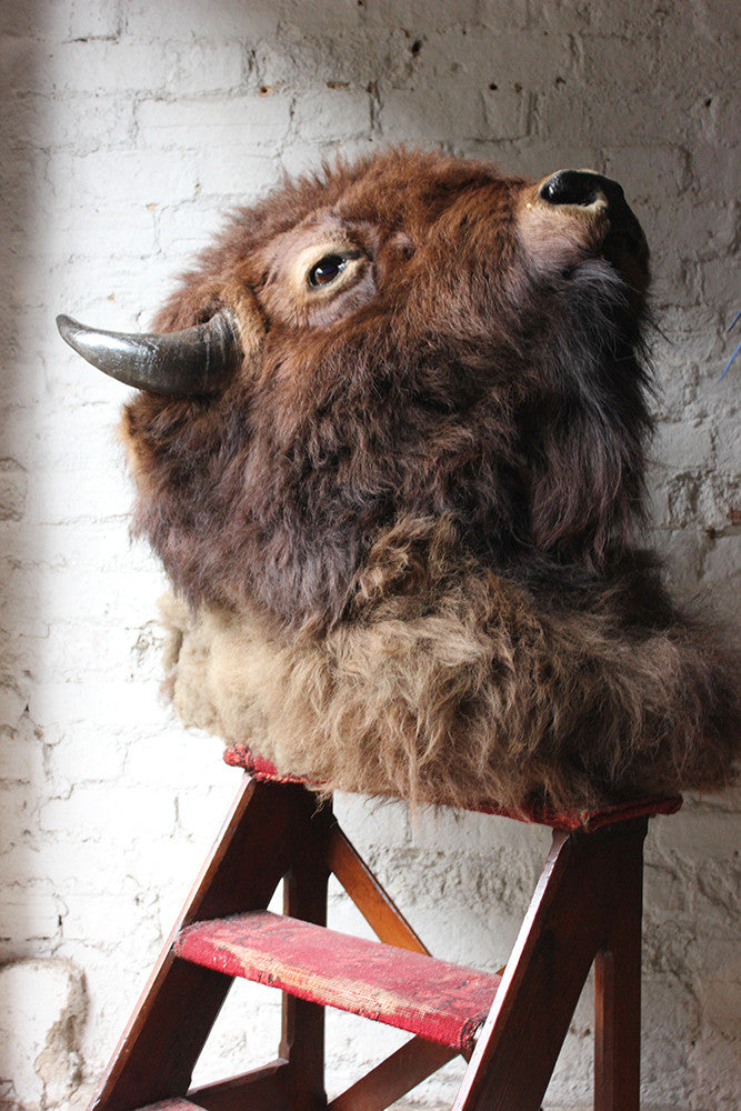 A Good Quality Mid 20thC Taxidermy Bison Head Mount
