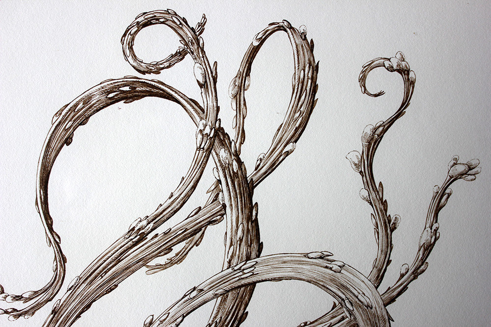 "Raphaël Ghislain,b.1928; A Botanical Sepia Ink Study on Paper; The Japanese Dragon Willow ""Salix Sachalinensis 'Sekka''"