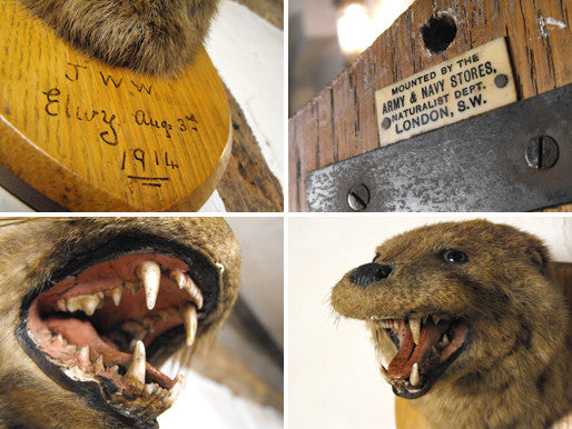 An Early 20thC Mounted Taxidermy Otter Mask Dated to August 1914