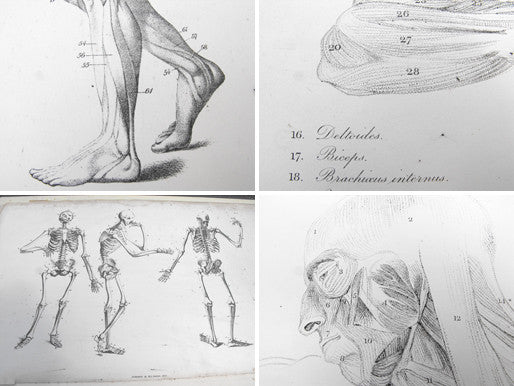 Anatomical Studies of the Bones and Muscles, for the use of Artists; Flaxman/Landseer 1833