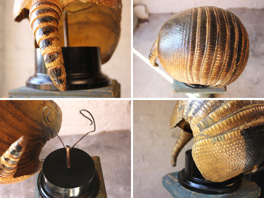 A Fine Early 20thC Natural History Taxidermy Specimen of an Armadillo Shell on Stand
