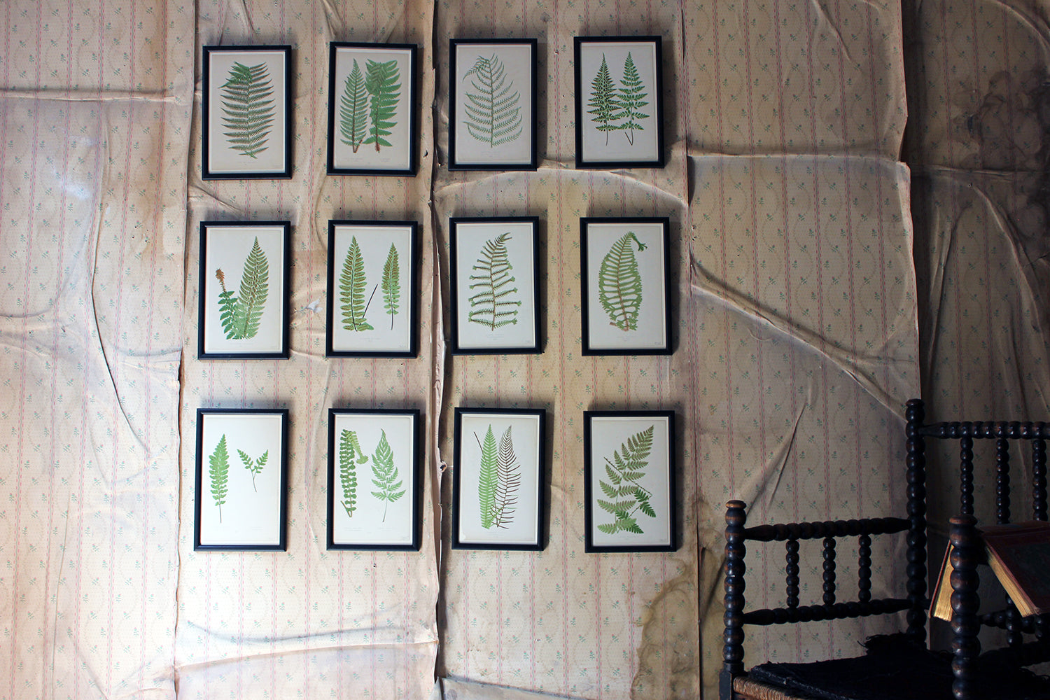A Group of Twelve Framed Mid-19thC Woodblock Prints of Ferns c.1869
