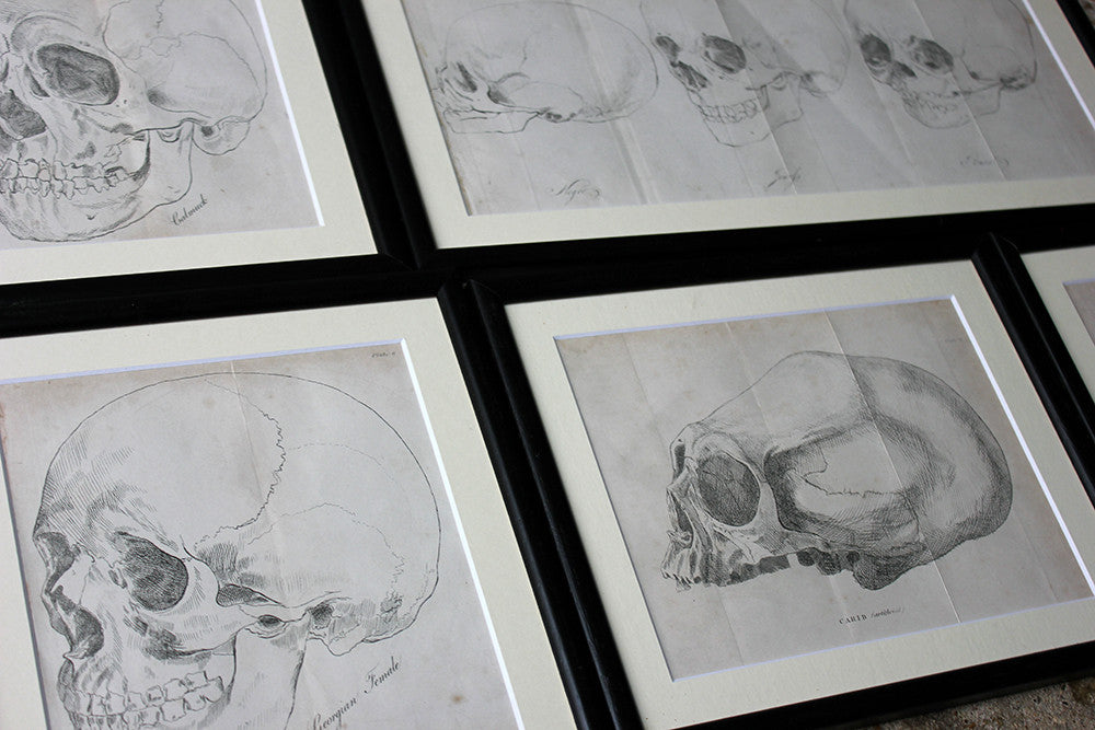 A Decorative Group of Seven Framed Early Victorian Engravings of Skulls from The Natural History of Man, by James Cowles Prichard c.1848