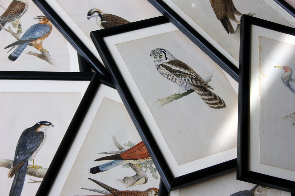 A Group of Eight Mid-19thC Hand-Coloured Engravings of British Birds c.1857