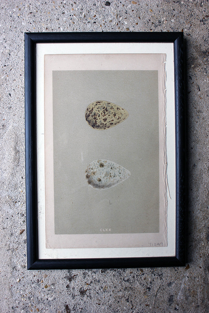 A Decorative Group of Thirteen Framed & Hand-Coloured Lithographs & Woodblock Prints of British Birds' Eggs c.1842-56