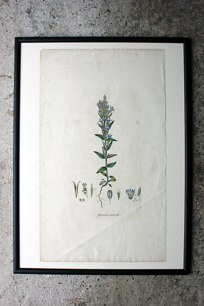 A Decorative Group of Five George III Period Framed & Hand-Coloured Stipple Botanical Engravings from The Temple of Flora; or Garden of Nature c.1799-1809