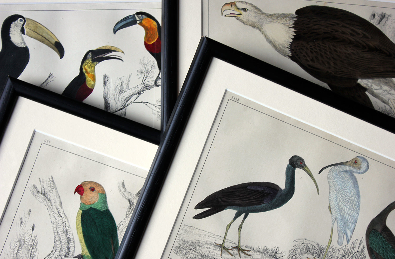 "An Attractive Group of Four 19thC Hand-Coloured Engravings of Birds From ""A History of the Earth, and Animated Nature "" c.1850"