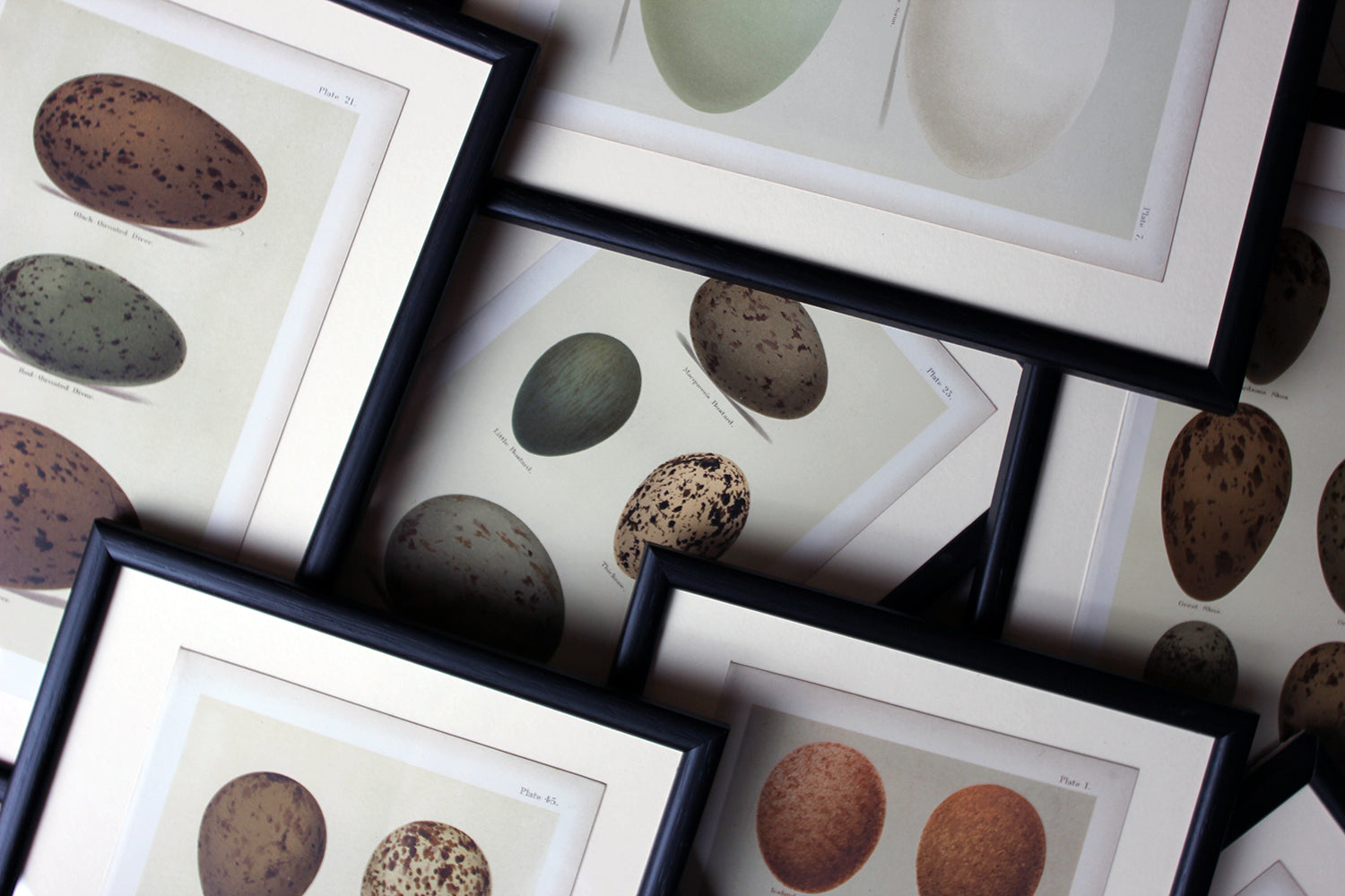 A Group of Twelve Framed Chromolithographs of British Birds' Eggs; Henry Seebohm c.1896