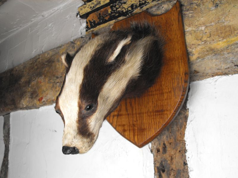 A Mid-20thC Mounted Taxidermy Badger Mask
