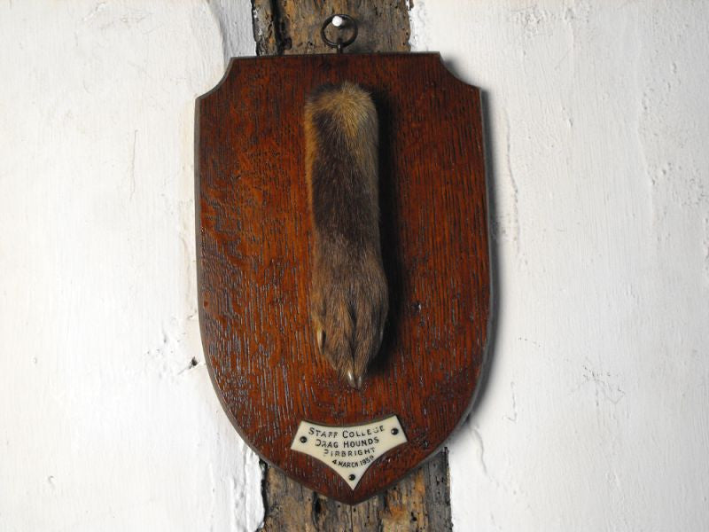 A Quality Taxidermy Fox Pad Dated to 1939