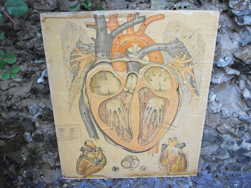 "A Very Large Early 20thC Educational Lithograph on Board; A Cross Section of the ""Healthy Heart"""