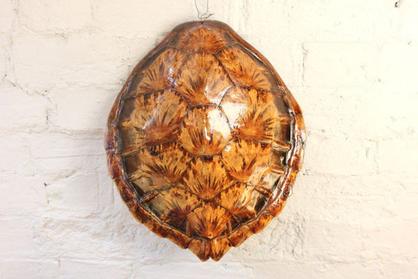 A Fine Early 20thc Antique Loggerhead Turtle Shell Doe