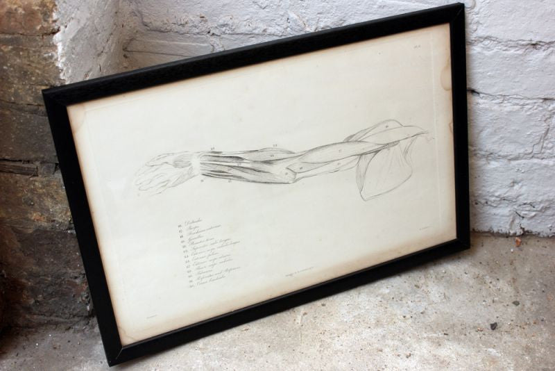 Framed Plate No.9; Anatomical Studies of Bones & Muscles, for the use of Artists; Flaxman/Landseer c.1833